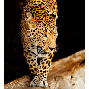 Леопард 5749