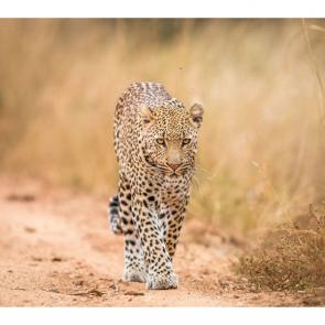 Леопард 5754