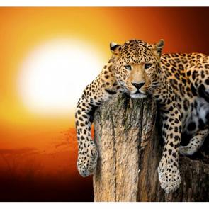 Леопард 5758