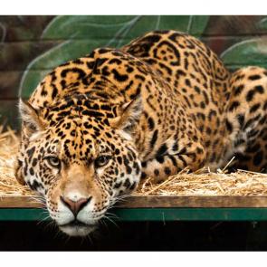 Леопард 5763