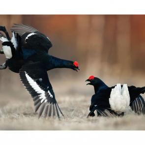 Птицы 5765