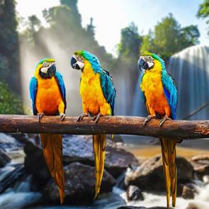 Птицы 5766