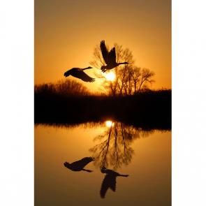 Птицы 5771