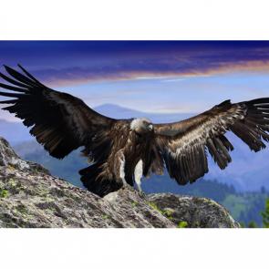 Птицы 5773