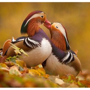 Птицы 5774