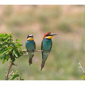 Птицы 5777