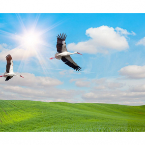 Птицы 5778