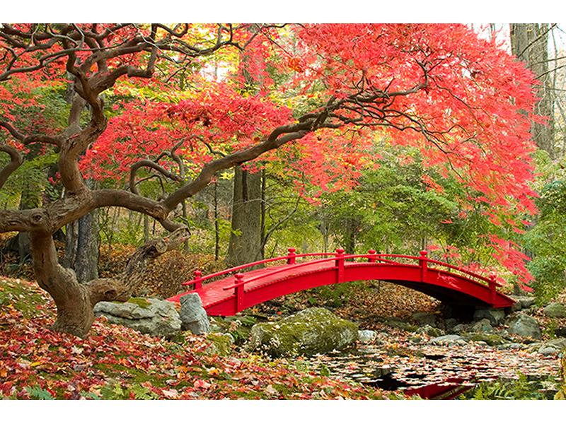 Сад в Японии 1203