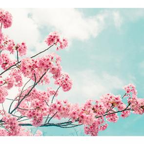 Сакура над небом