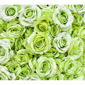 Салатовые розы