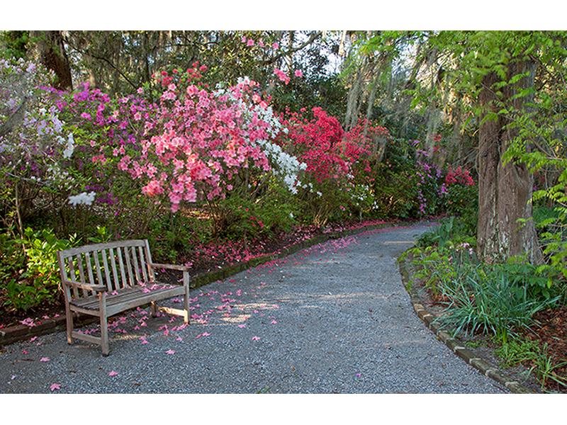 Скамейка в саду 1168