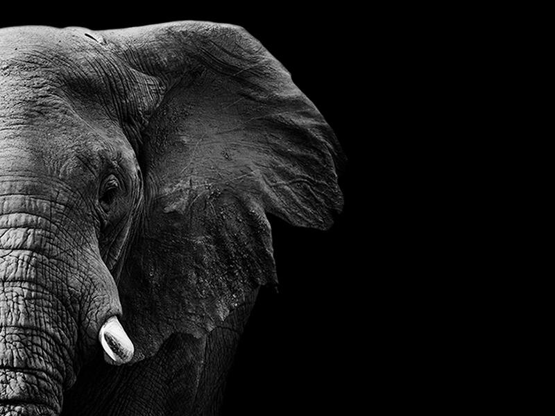 Слон 2469