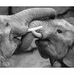 Слоны 2