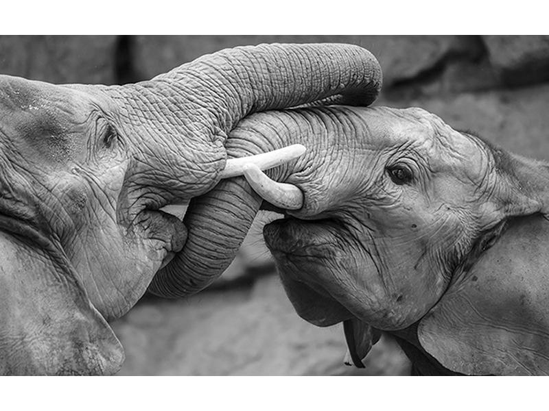 Слоны 2 2470