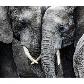 Слоны 3
