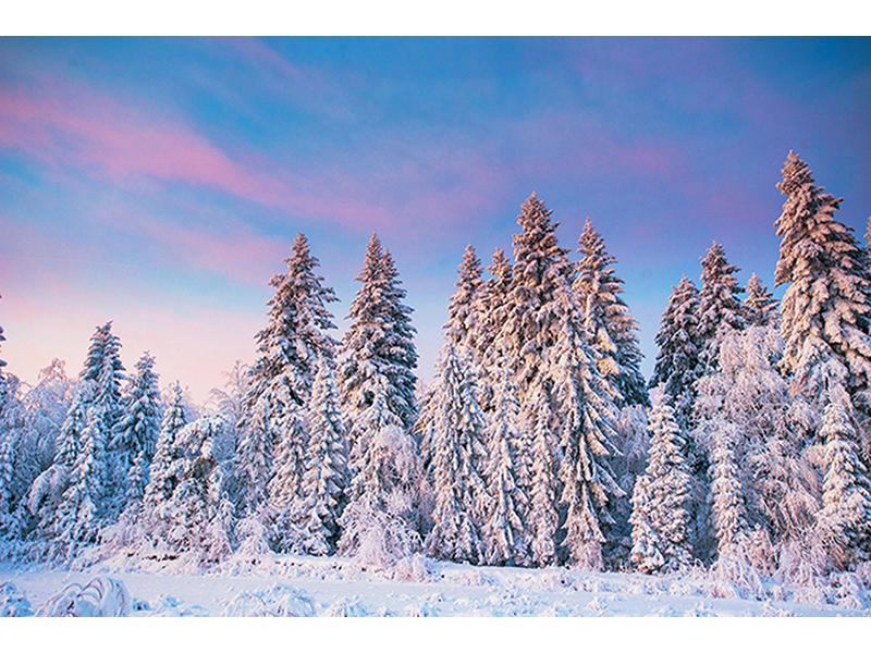 Снежный лес 1163