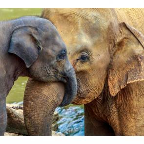 Слон 5779