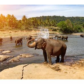 Слон 5780