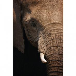 Слон 5781