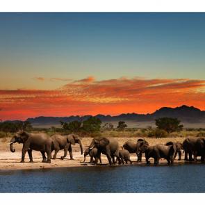 Слон 5782