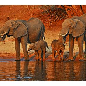 Слон 5783