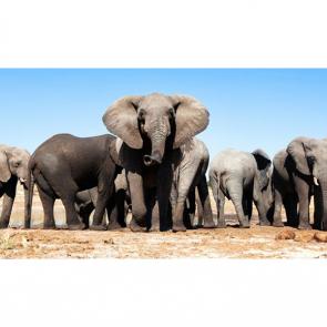 Слон 5784