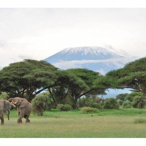 Слон 5785