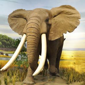 Слон 5786