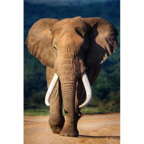 Слон 5787