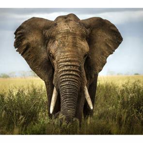 Слон 5788