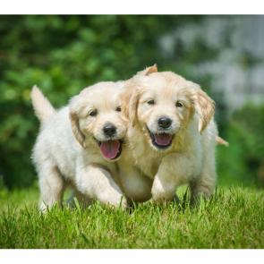 Собаки 5794