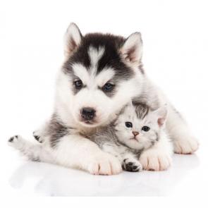 Собаки 5796