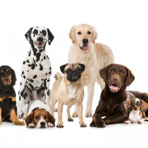 Собаки 5797