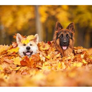 Собаки 5804