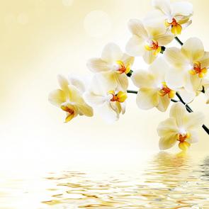 Солнечная орхидея