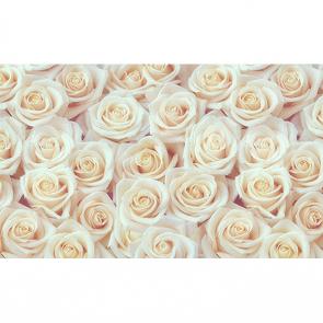 Стена из белых роз