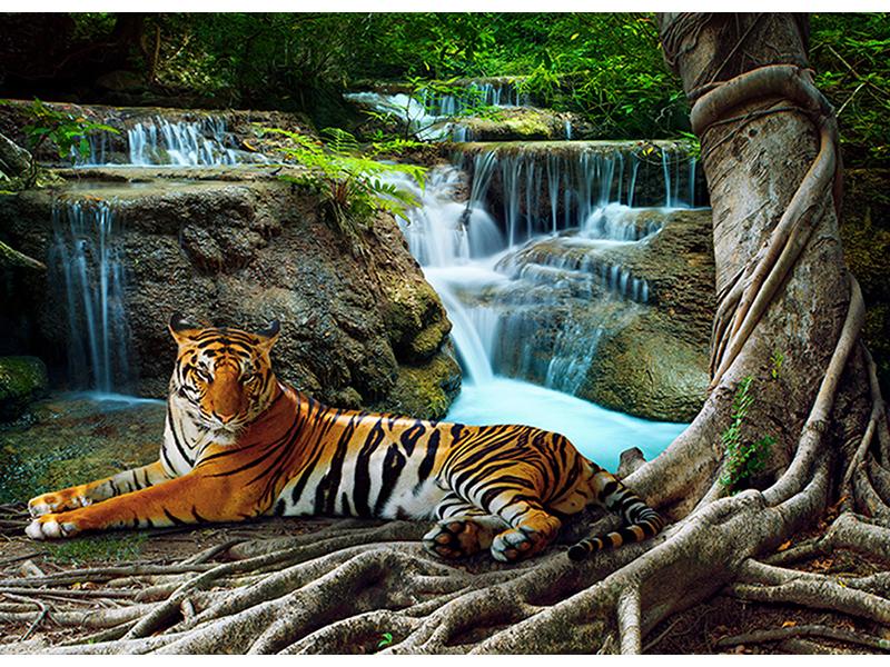 Тигр 2454