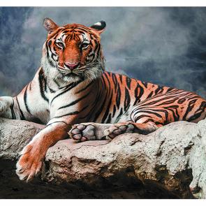 Тигр в дымке