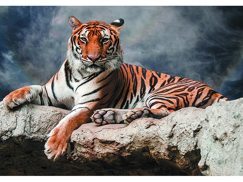 Тигр в дымке 2455