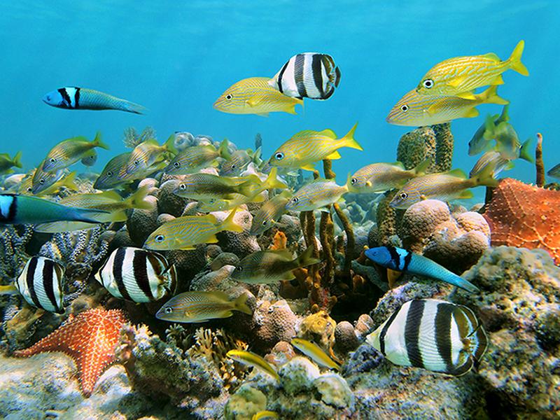 Тропические рыбы 2468