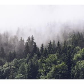 Туман 07745