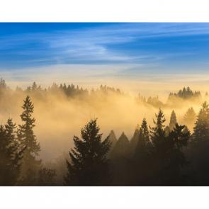 Туман 08390