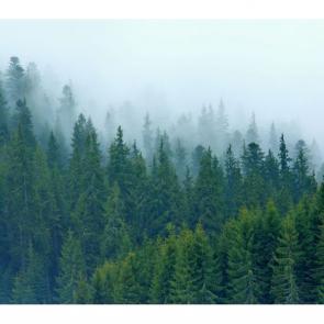 Туман 13731