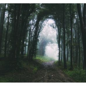 Туман 13980