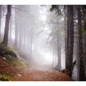 Туман 15518