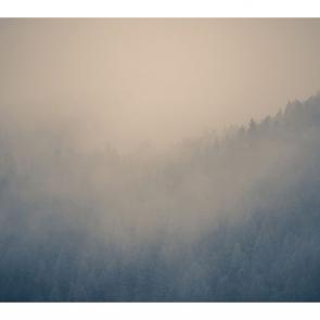Туман 15793
