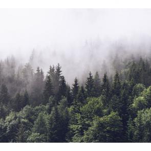 Туман 15871