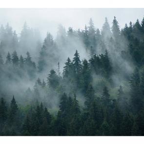 Туман 16528