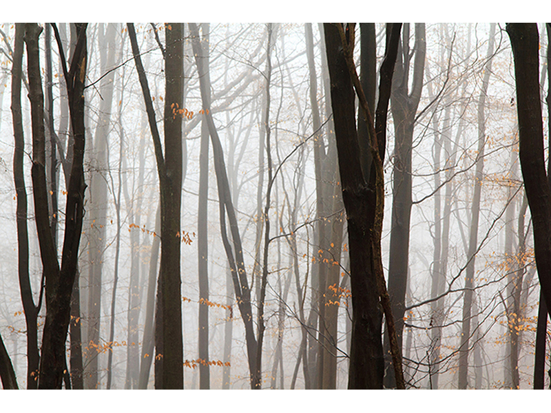 Туман в лесу 1116