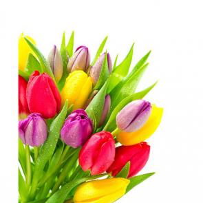 Тюльпаны 01020